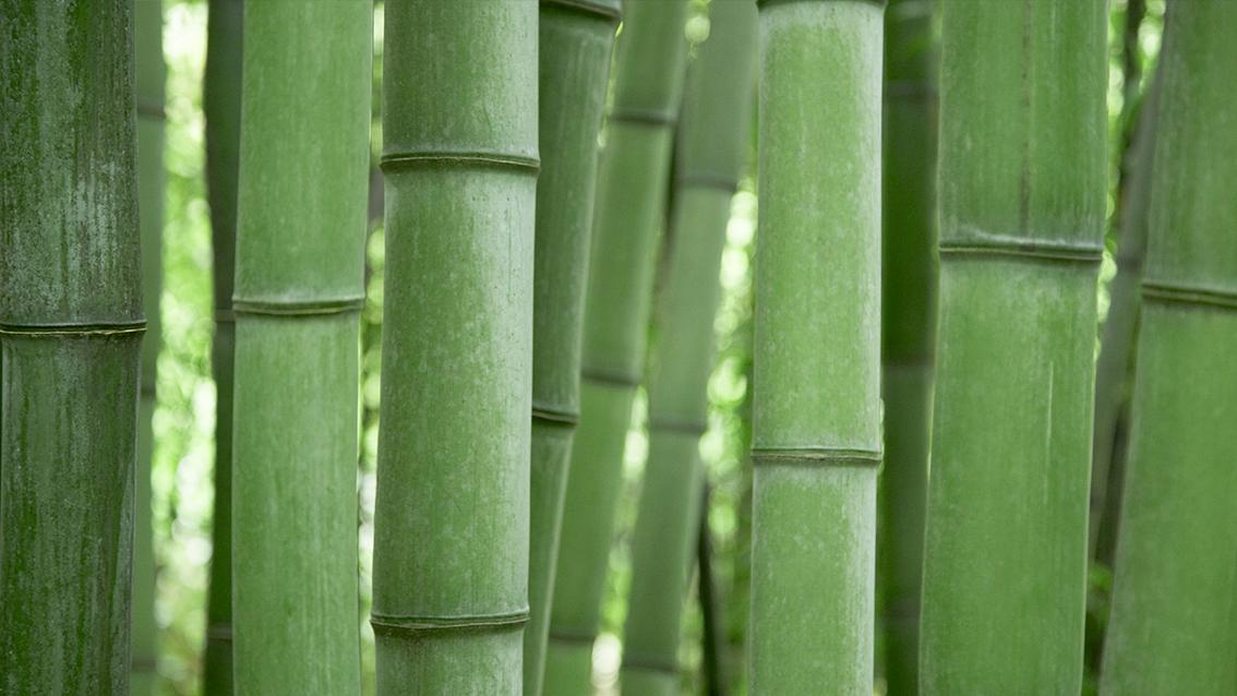 IfI Retro bambus